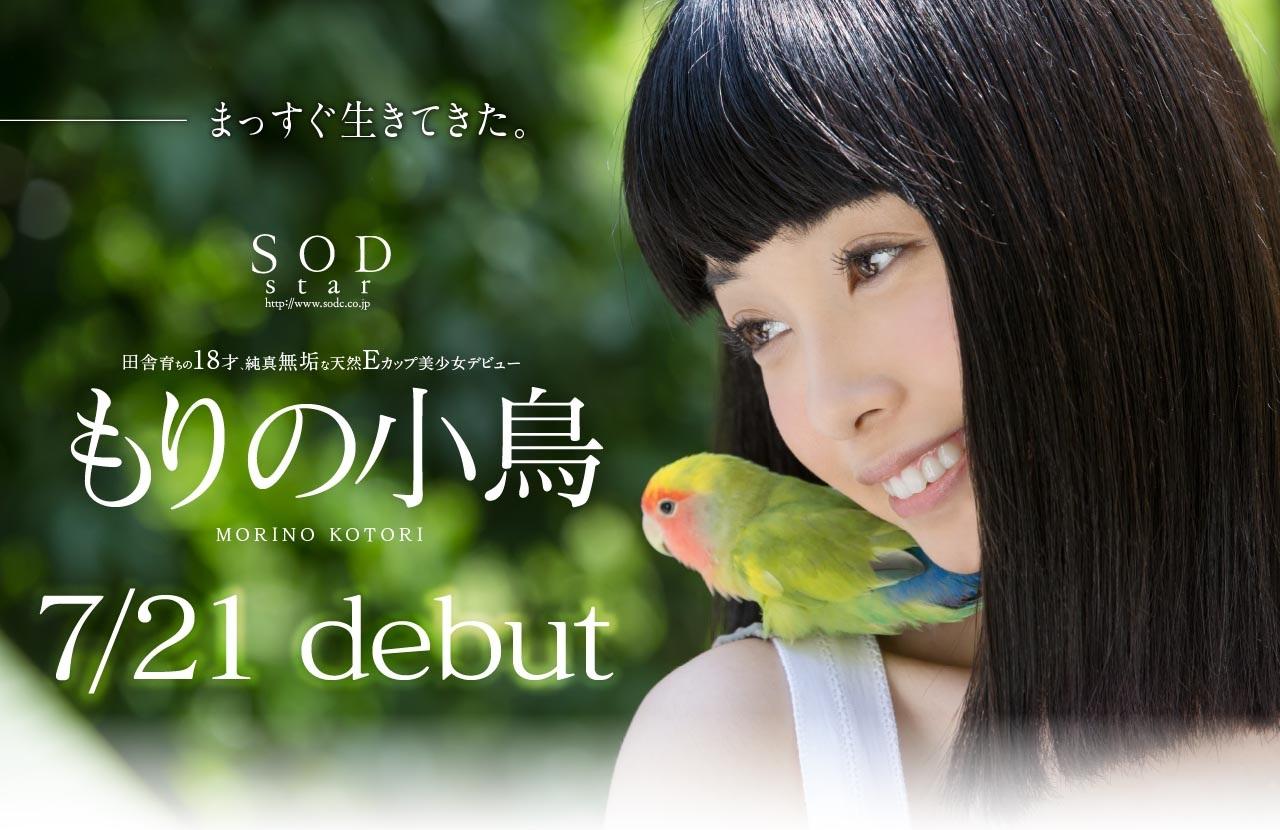 もりの小鳥001