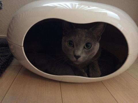 猫カプセル