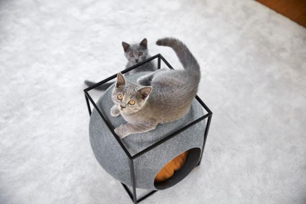 cat-cocoon-meyou-sanchez-gadenne-15.jpg