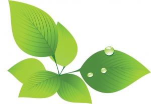 leaf0256.jpg