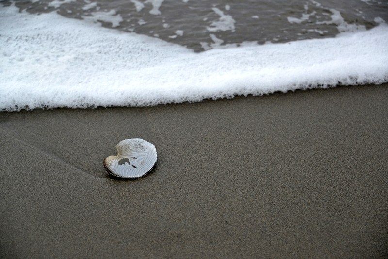浜の貝殻-1