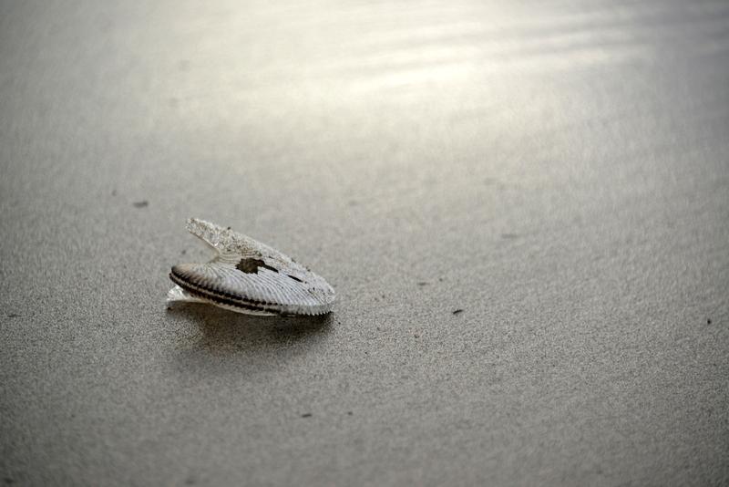 浜の貝殻-2