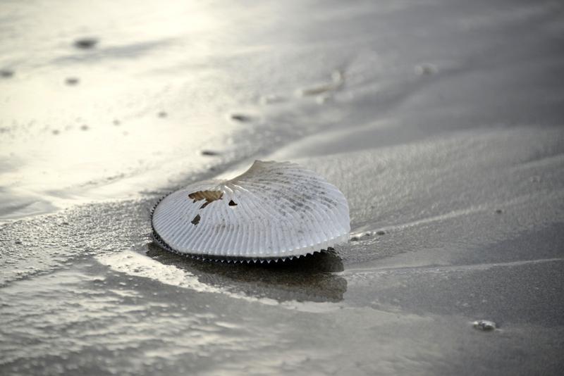 浜の貝殻-3
