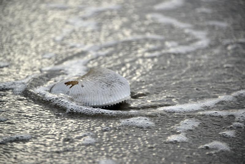 浜の貝殻-4