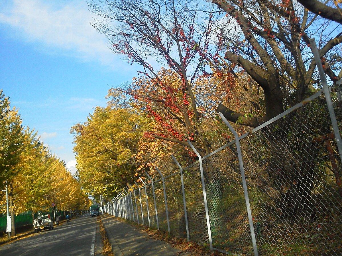 F1000149紅葉青葉台公園