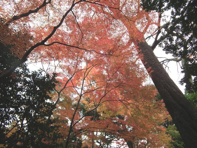 後楽園の紅葉(1)
