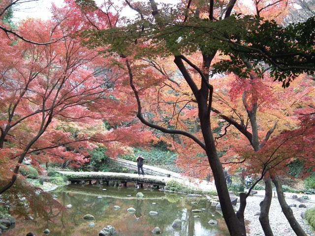 後楽園の紅葉(3)