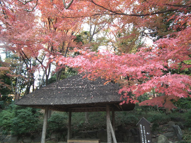 後楽園の紅葉(4)