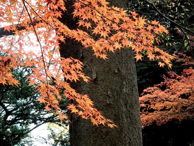 後楽園の紅葉(9)