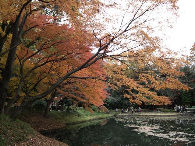 後楽園の紅葉(12)