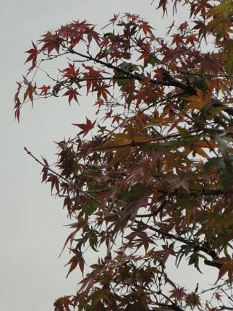 地元の紅葉
