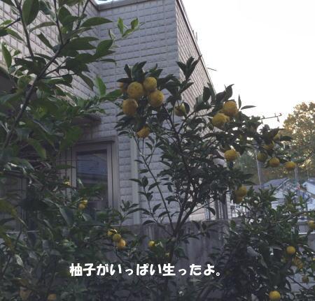 20151203_10.jpg