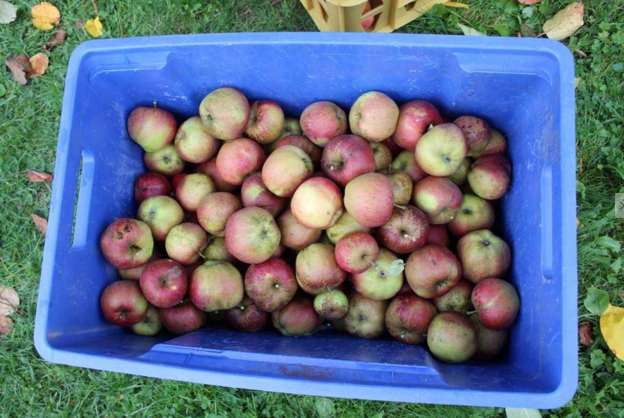 BIOレシピビオキッチンヨーロッパ家のりんご1