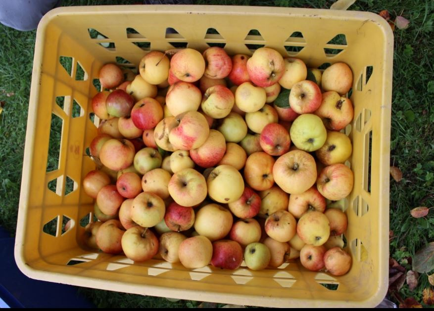 BIOレシピビオキッチンヨーロッパ家のりんご2