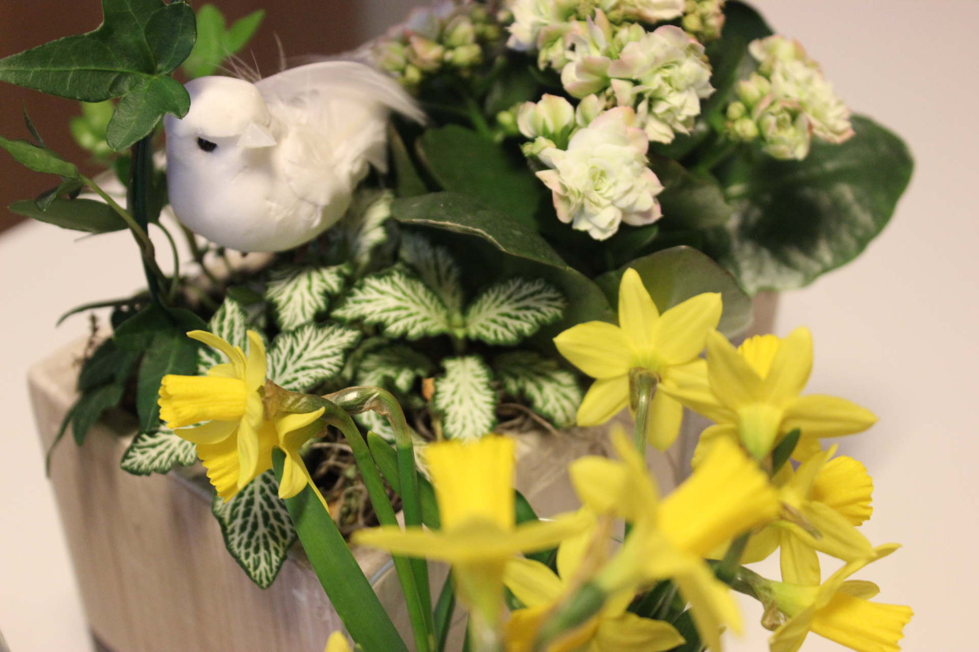 BIOレシピビオキッチンヨーロッパ鳩