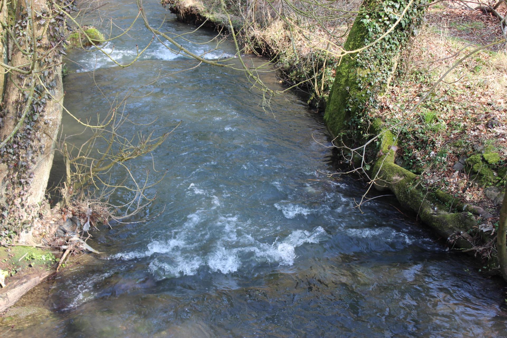 BIOレシピビオキッチンヨーロッパ小川