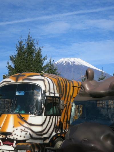 safari20153.jpg