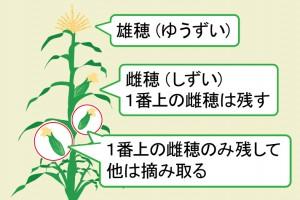 cultivation_n041-300x200.jpg