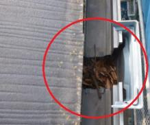スレート屋根4