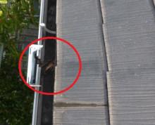 スレート屋根3