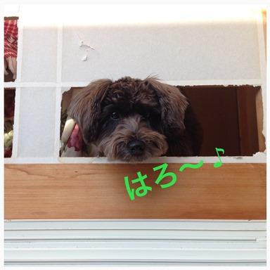 IMG_4459.jpg