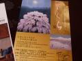 ferumersakurakaiga3-web600.jpg