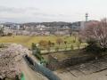 kominejyo-sakura10-web600.jpg