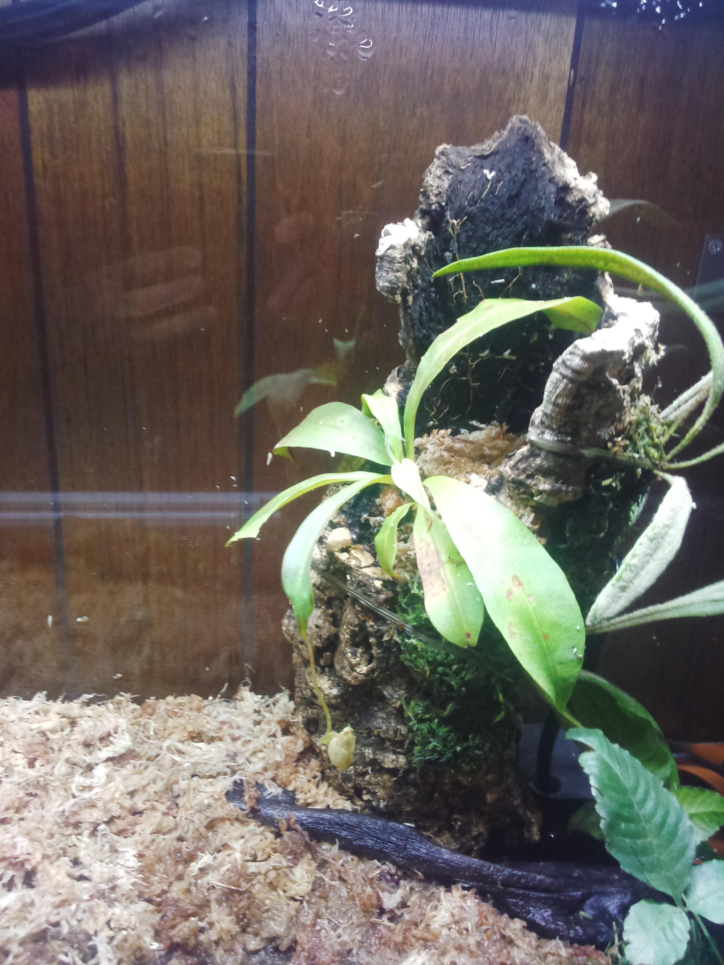 レイアウト植物