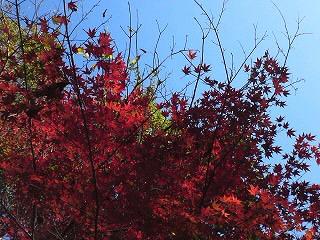 青空&紅葉