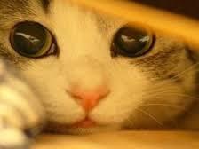 猫の画像1