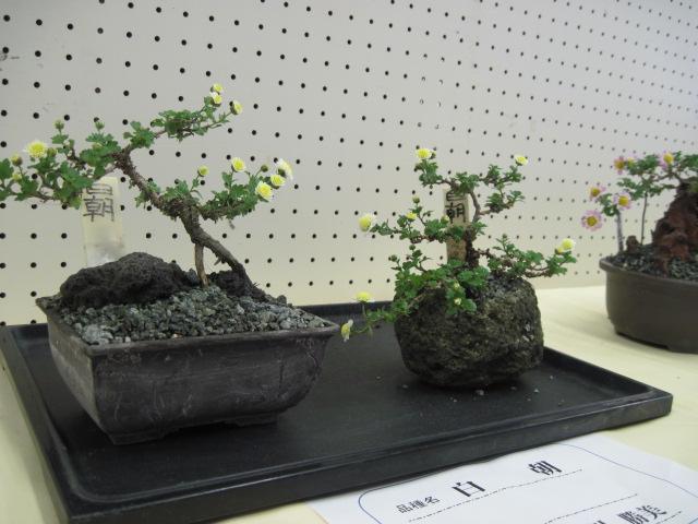 kokiku05