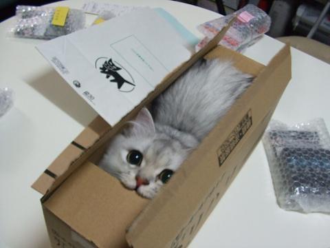 boxcat.jpg