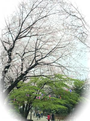 Asukayama park1