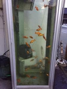 20160714-金魚