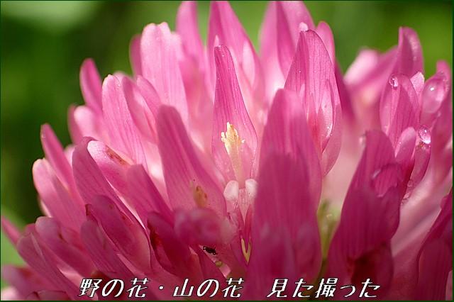 s-O20160525-114343-0.jpg