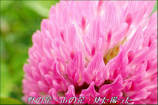 s-O20160619-104020-0.jpg