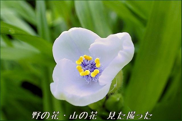 s-O20160624-063835-0.jpg