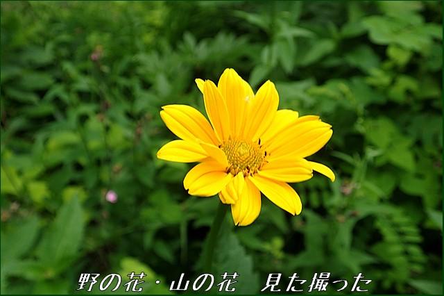 s-O20160702-142820-0.jpg