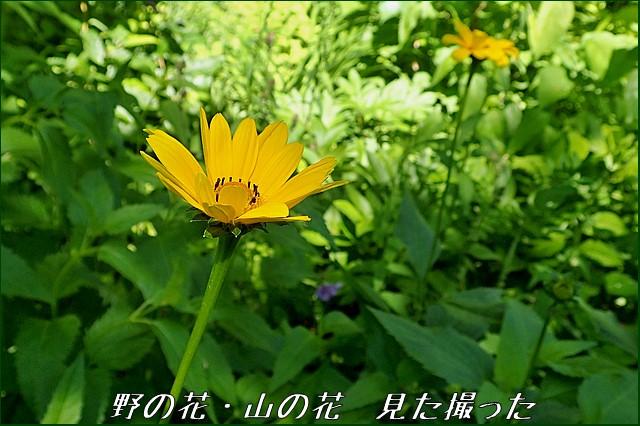 s-O20160705-130849-0.jpg