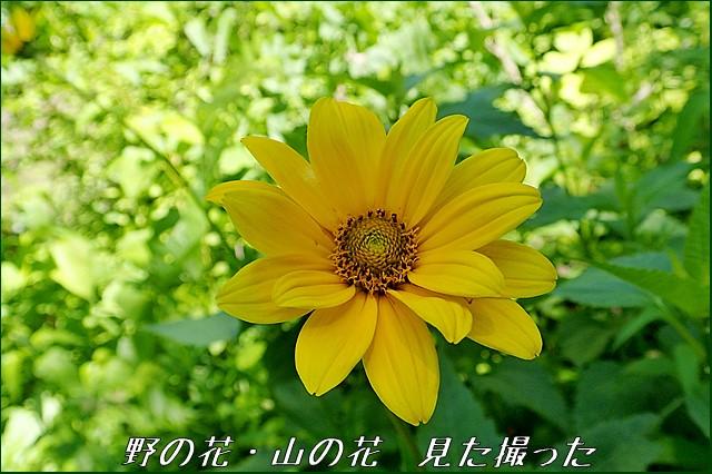 s-O20160705-130903-0.jpg