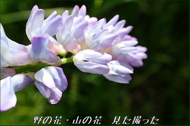s-O20160705-141721-0.jpg