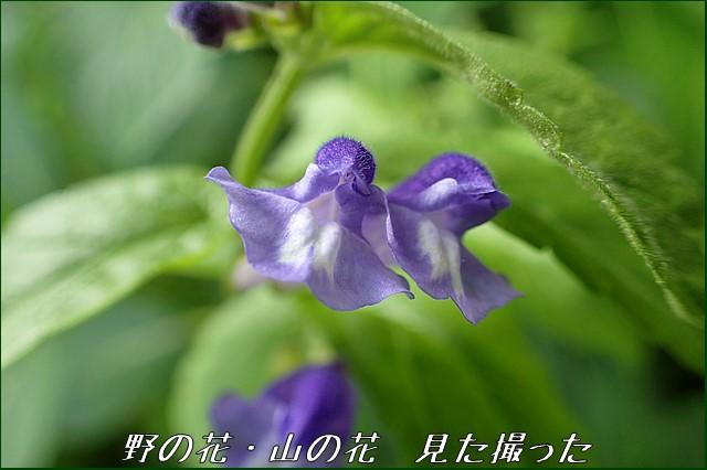 s-O20160715-105759-0.jpg
