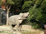 ゾウのお湯飲み