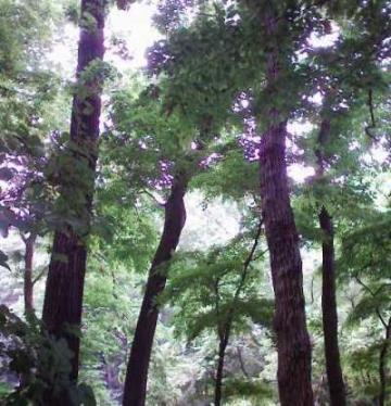 木々の息吹