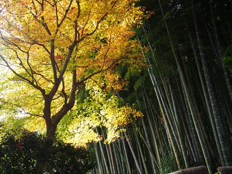 竹林と紅葉