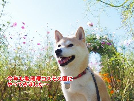 亀岡夢コスモス園に来たよ~