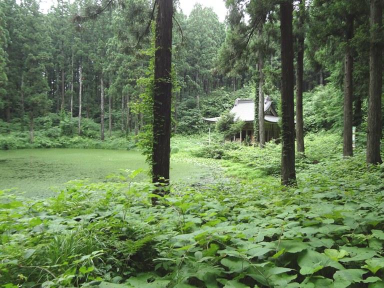 小沼のほとりに佇む小沼神社社殿