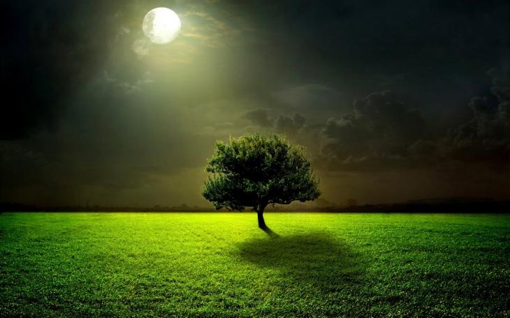 green_life_nature_grass_tree_harmony_hd-wallpaper-1669460_20151203103627ae3.jpg