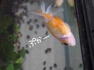 11gatu1-2.jpg
