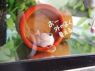 GWsouji8-2.jpg